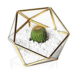 Glass Geometric Terrarium - Succulent Planter