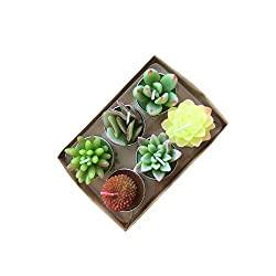 Succulent Cactus Tea Light Candles Unscented 6pcs Assorted