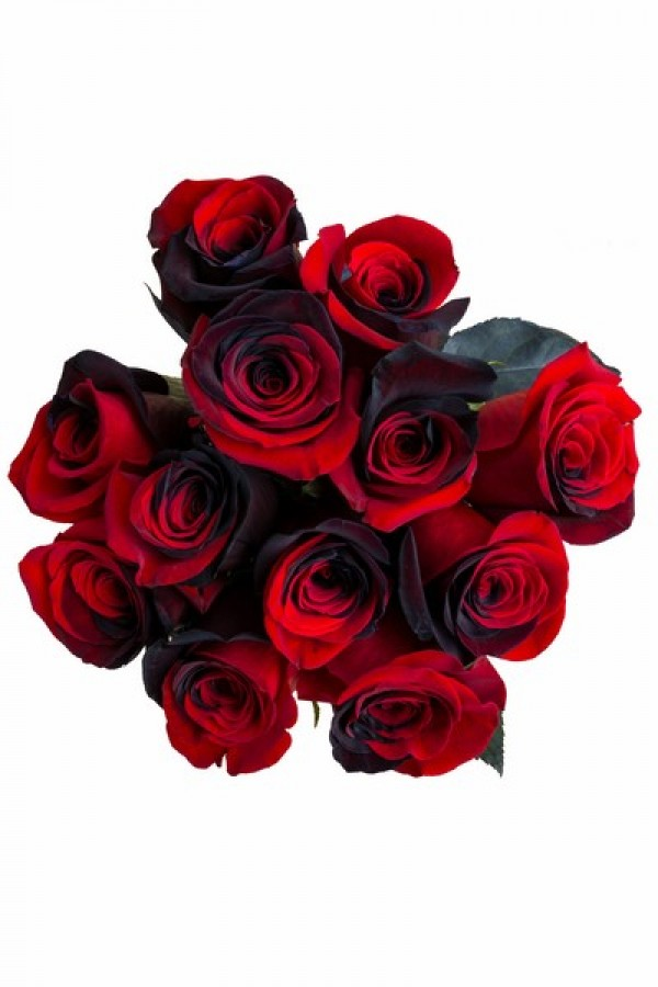 Black and Red Tinted Roses
